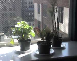startup office plants